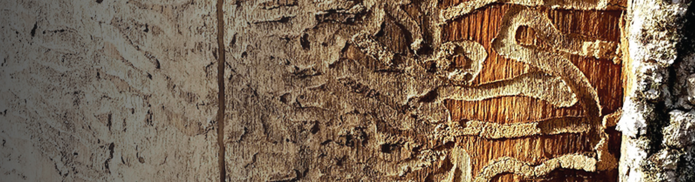 EAB Detection Services Banner Image