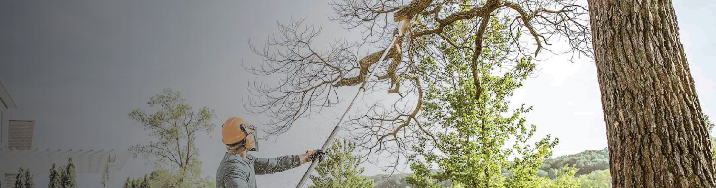 Tree Pruning Banner Image
